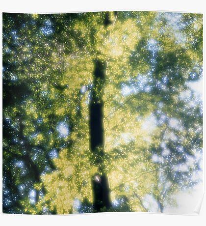Beech forest in spring - dreamlike Poster