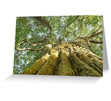 The Happy Hour Cottonwood Tree Greeting Card