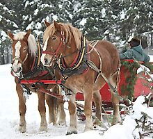 Sleigh Ride Anyone! by Rose Landry