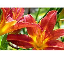 Sunburst Lilies Photographic Print