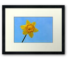 Daffodil Photo Framed Print