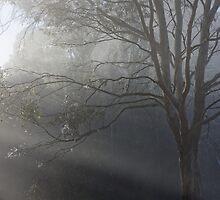 Sun streaming thru mist by Matthew Hockley
