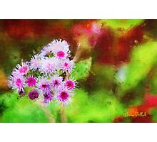 Wild and Crazy Ageratum! Photographic Print
