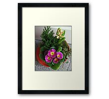 Primrose, Budding Hyacinth and a Little Tree Framed Print