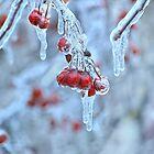 Frozen berries by Laurie Minor