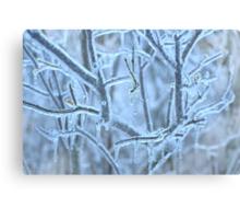Winter Blues... Canvas Print
