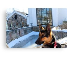 German Shepard in thought Canvas Print