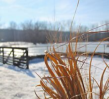 Golden Grass in a sea of white and blue by jjastren