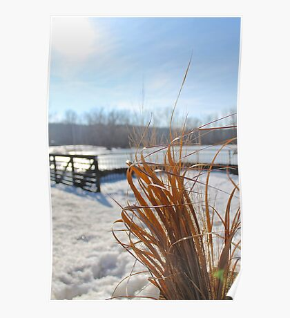 Golden Grass in a sea of white and blue Poster