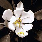 Sweet Magnolia by Sharon Woerner