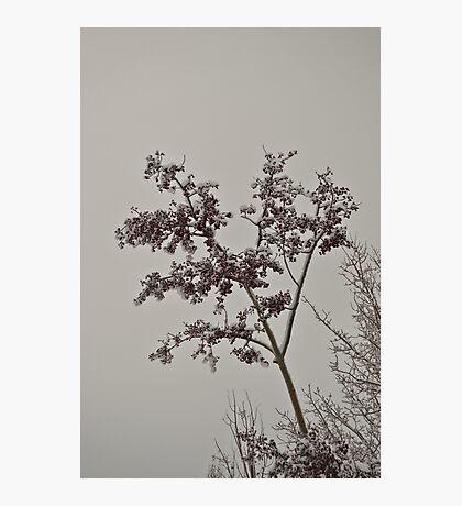 Untouched Photographic Print