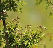 Tiny Pink Buds in a Sea of Green by hummingbirds