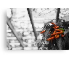 Spice of life Canvas Print