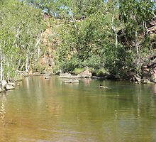 A Lone Swimmer in Umbrawarra Gorge, Pine Creek. N. Territory. by Rita Blom