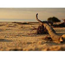 Summer Solitude Photographic Print