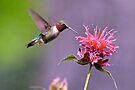 Checking The Menu by NatureGreeting Cards ©ccwri