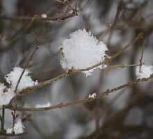 Gentle snowfall #2 by Laurie Minor