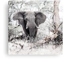Elephant challenge, Kruger Canvas Print