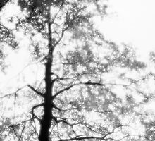 Beech tree with glowing leaves - monochrome by intensivelight