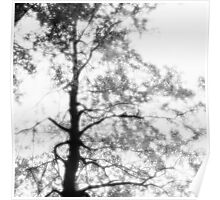 Beech tree with glowing leaves - monochrome Poster