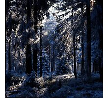 Frost-covered forest Photographic Print