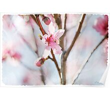 Blossom and Tulle Poster