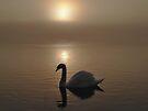 Swan Lake in the Mist by David Alexander Elder