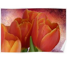 Tulip with Textured Background Poster