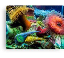 Aquarium Creatures Cape Town Canvas Print