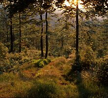 Forest path bathing in golden light by intensivelight