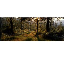 Forest path bathing in golden light Photographic Print