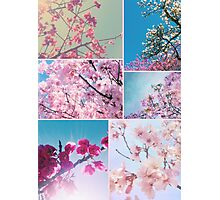 Spring Floral Collage Pink White Cherry Plum Peach Magnolia Photographic Print