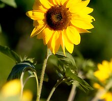 Sunflower Personality by WestbrookArts