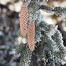 Frosty Pinecones by AbigailJoy