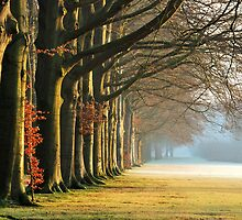 In the park on a frosty morning by jchanders