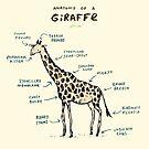 Anatomy of a Giraffe by Sophie Corrigan