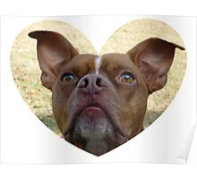 Red Nose Pit Poster