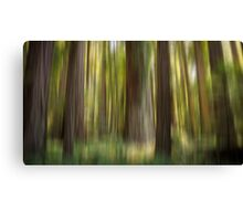 Redwood Dream Canvas Print