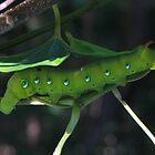 Greenpillar  by Joel Fourcard
