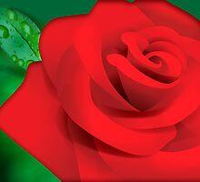 red rose by sarandis