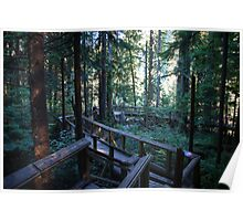Capilano Park Tree Top Walk Poster