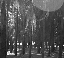 Forest at Sholom Park in Black and White by ValeriesGallery