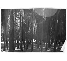 Forest at Sholom Park in Black and White Poster