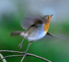 Take off! Roblin, County Kilkenny, Ireland by Andrew Jones