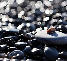 Shell on the rocks by Daniele Zighetti