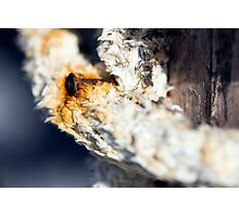 A consummate and corroded rusty nail Photographic Print