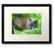 Sleeping Zoe Framed Print