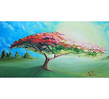 Poinciana Tree Painting Photographic Print