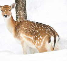 Bambi by Poete100