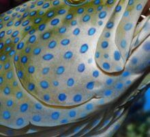 PEACOCK GROUPER Cephalopholis argus ( NOT A PHOTOGRAPH OR PHOTOMANIP) Sticker